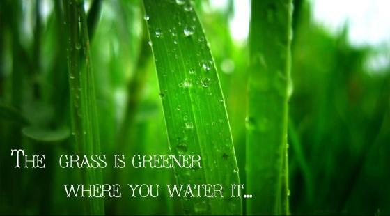 GrassWater